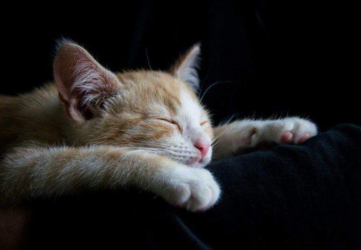 Ceva soluții pentru insomnii?