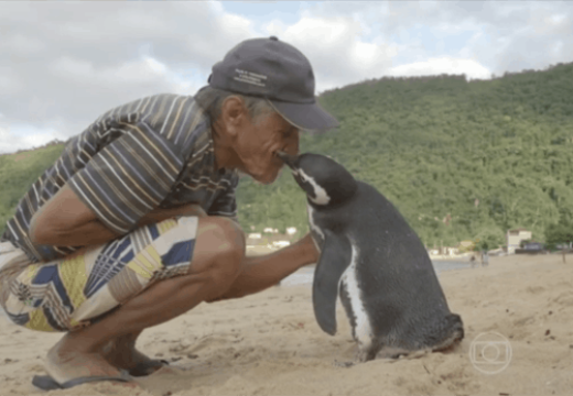 Când un pinguin are mai mult suflet decât milioane de oameni