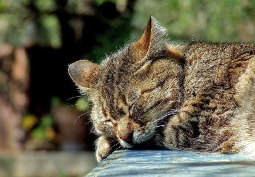 Cum am scăpat de problemele cu somnul