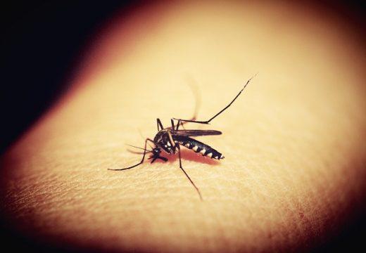 Cele mai bune metode de a scăpa de țânțari